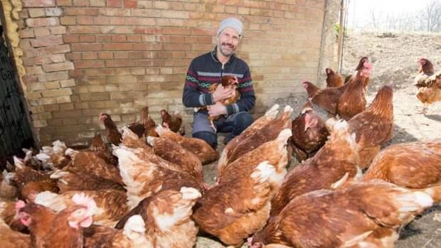 Куриц раздают в аренду в Германии