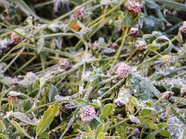 В ряде российских регионов грядут заморозки
