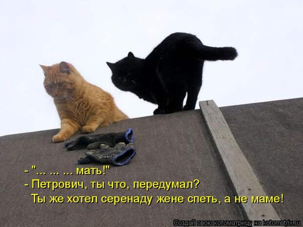 kotomatritsa_Xs (700x524, 251Kb)