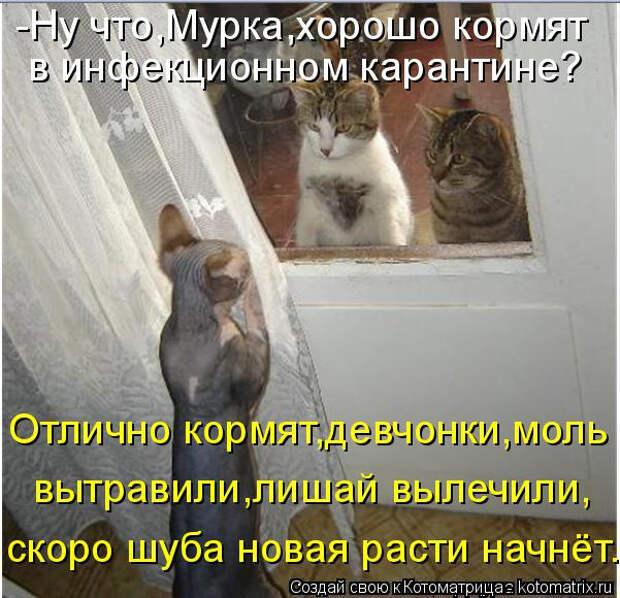 kotomatritsa_CK (601x580, 272Kb)