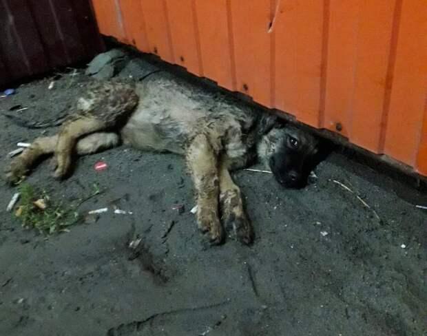 Одинаковых щенков нашли ночью под дождем в разных районах. Один из малышей оказался болен