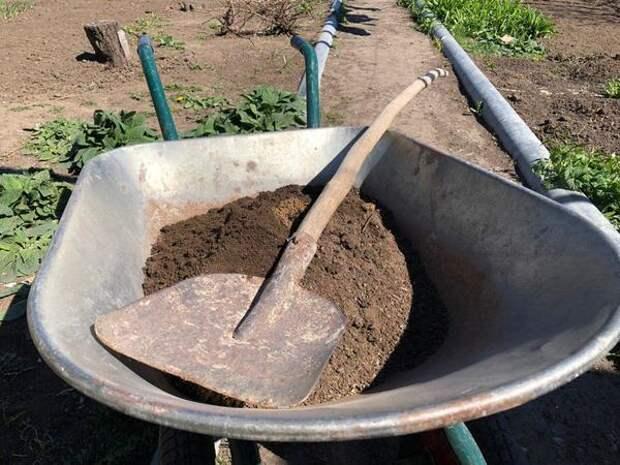 Во время весенней перекопки добавляют навоз или готовую питательную почвосмесь