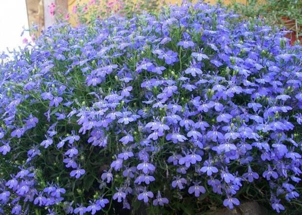 10 наиболее подходящих растений для выращивания вподвесных горшках