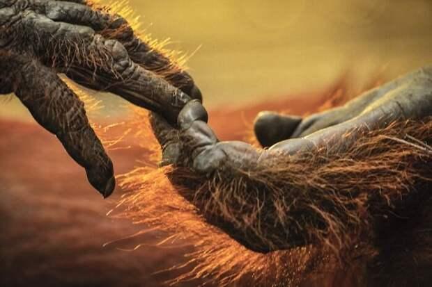 Красота животного мира дикой природы