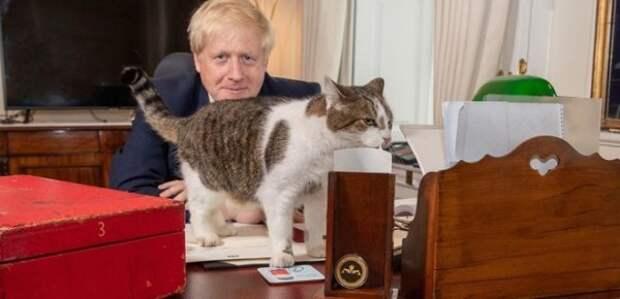 Влияние кота Ларри на британскую политику – нешуточные доказательства