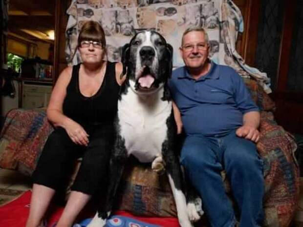 Жена уговорила мужа завести крохотного щенка. Посмотрите на это чудо спустя год!