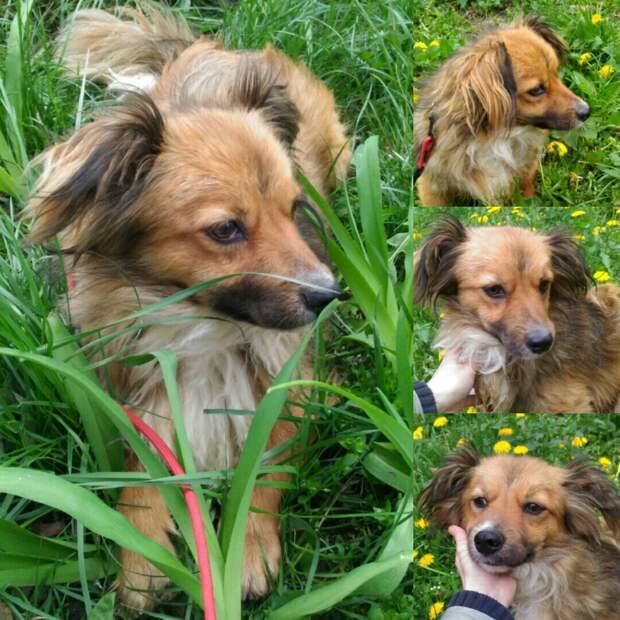 Голодному псу дали сосиску, а он… отнёс её кошке! История бездомного Вайзика