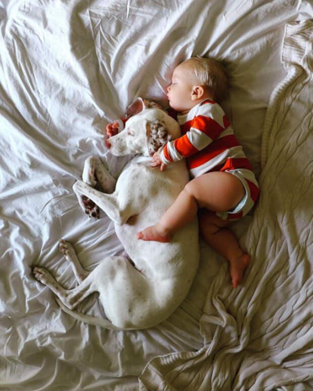 Эту собаку спасли от плохих хозяев и она боялась всех, кроме него… Этот 11-месячный малыш возродил в ней веру в людей!