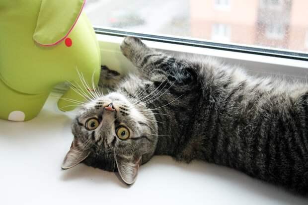 Он замечательный полосатик, очень хороший, контактный и ласковый котик! И он очень хочет жить с вами!)