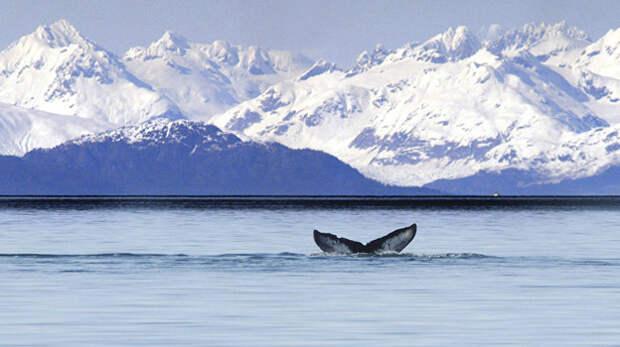 Крымчане призвали США вернуть Аляску России