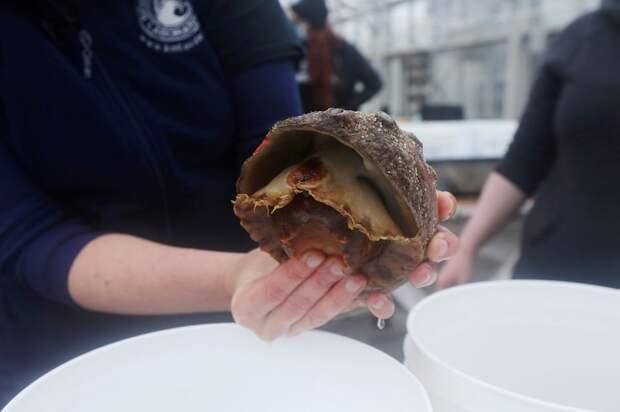 «Романтическое решение»: экологи спасают редчайший моллюск