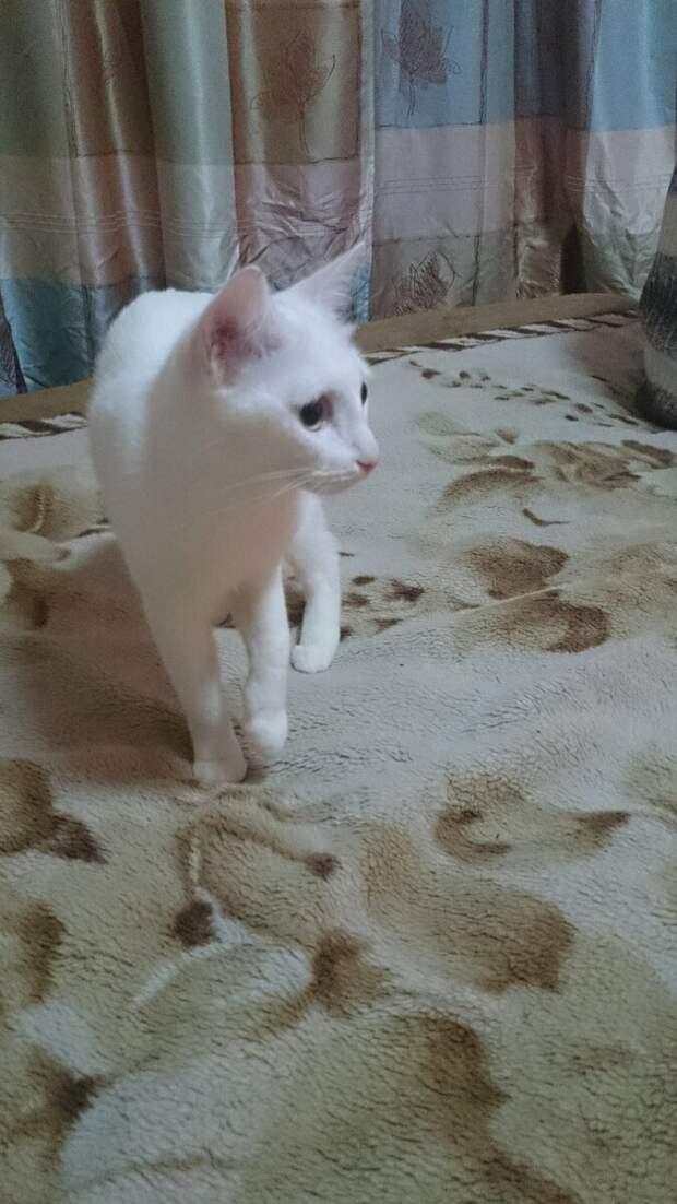 Наша кошка боялась питомицы родни, где мы гостили. Но когда Муся напала на супруга, бросилась его защищать