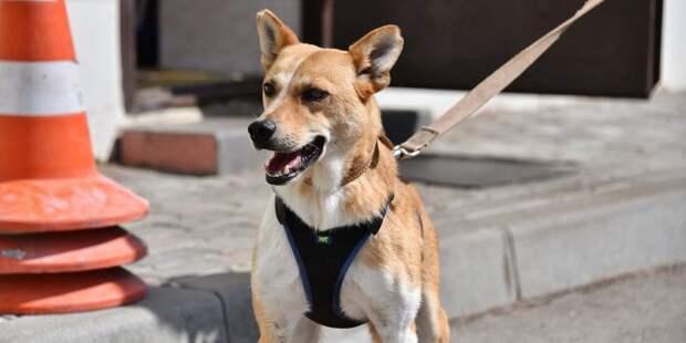Потерявшаяся в Лихачевском переулке собака возвращена хозяину