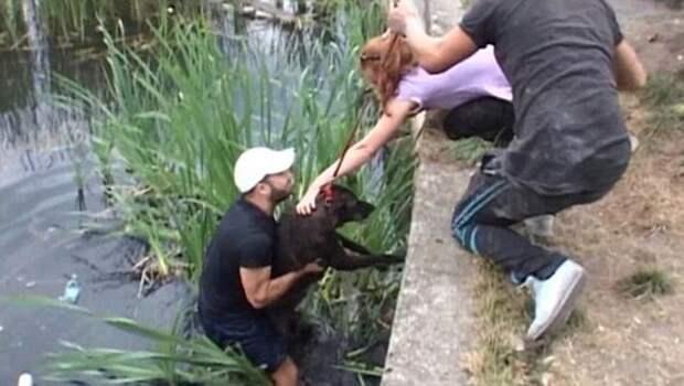 Кто-то бросил двух собак в озеро на верную смерть, 2 дня они с надеждой ждали спасения