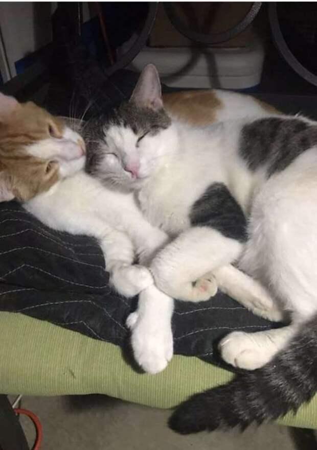 Девушка взяла кота из приюта. Узнав, что у него был друг, она разыскала его, чтобы МУРлыка был счастлив