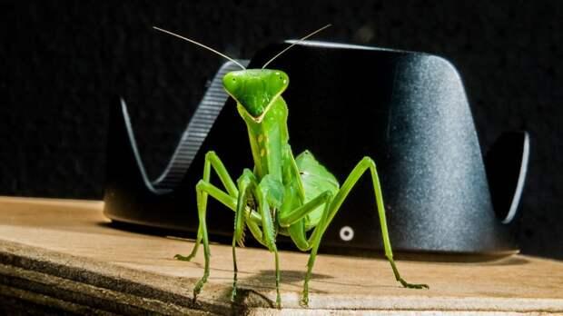 Школьник из Ховрина держит дома экзотических насекомых