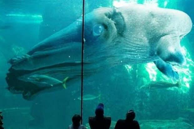 Самые редкие животные мира: они существуют в одном экземпляре
