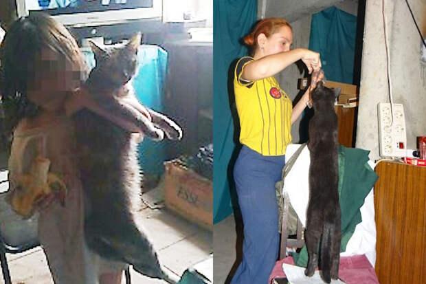 В Подмосковье найдены девочки-маугли, воспитывающиеся вместе с 19-ю кошками