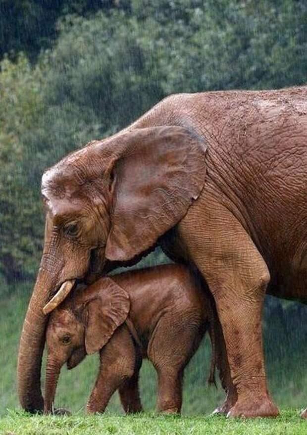 Только положительные эмоции: 15 снимков с животными