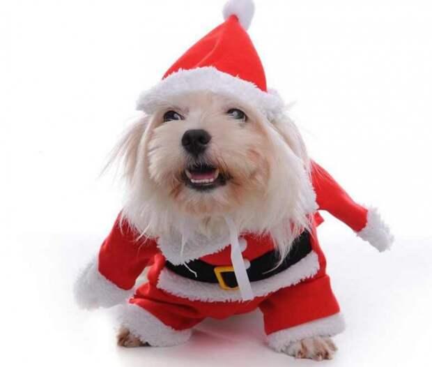 выкройка для собаки куртка пальто новогодняя