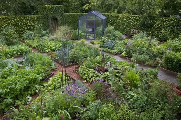 Буйство зелени растений