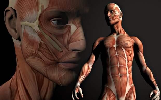 С какой скоростью обновляется наше тело на самом деле