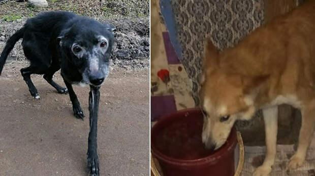 Женщина устроила концлагерь для собак в своей квартире под Тверью