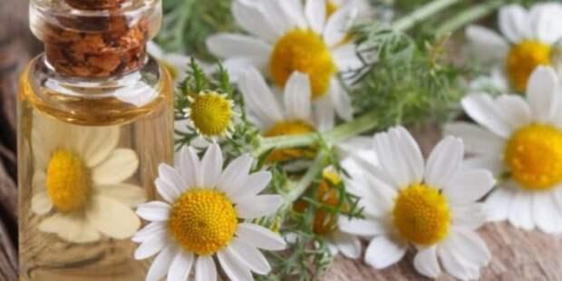 7 трав для облегчения симптомов менопаузы