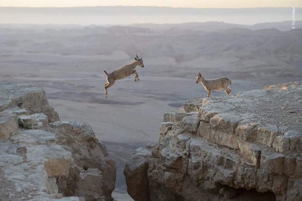 Фото дня. Лучшие снимки дикой природы-2020