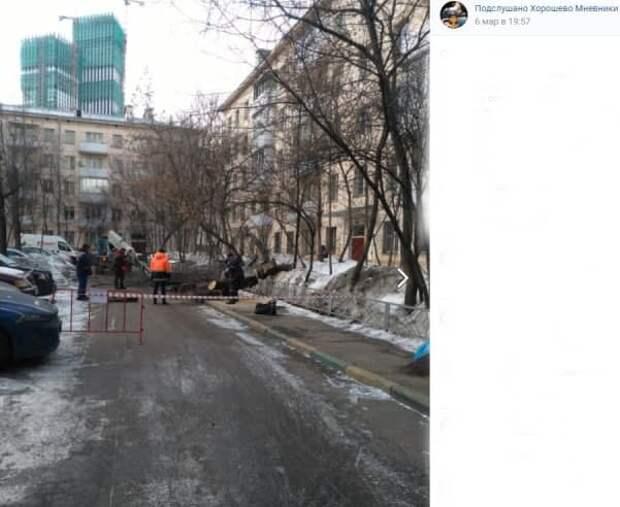 На улице Народного Ополчения удалили сухостой