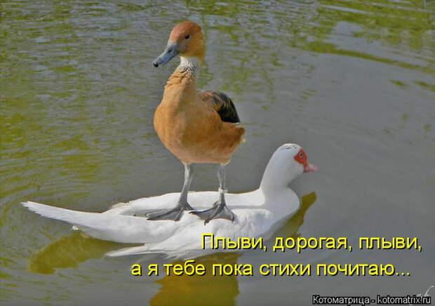 kotomatritsa_X (700x492, 304Kb)