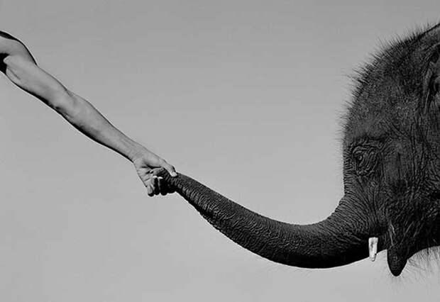Сильные фото про сложные отношения азиатов со слонами