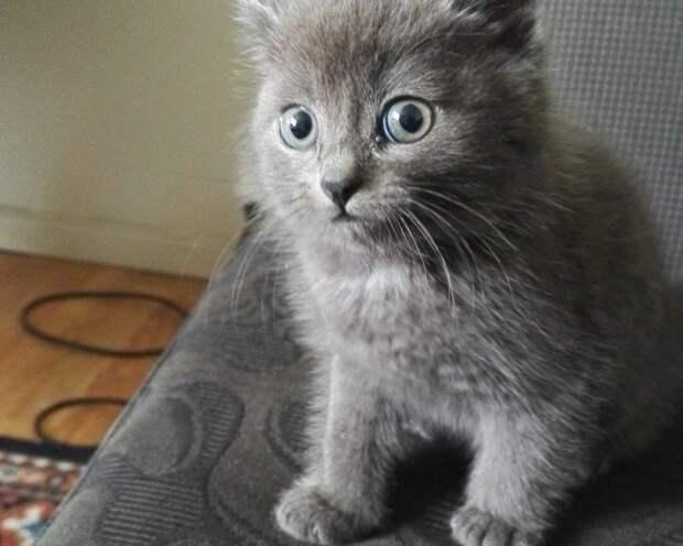 Лучшие котята —2016 котики, мимими