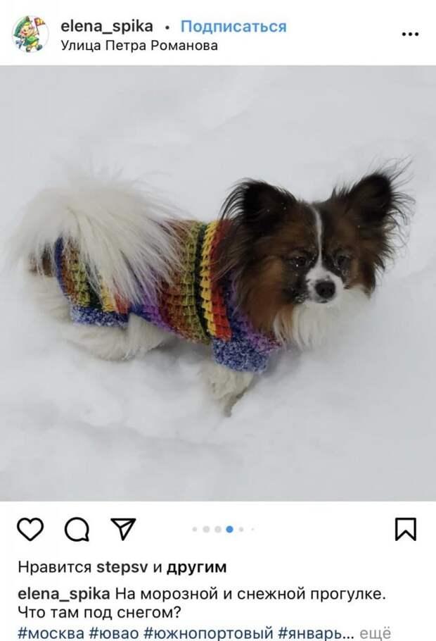 Фото дня: собака-бабочка на снежной прогулке