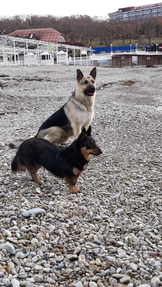 Грязный щенок встретил на улице хозяйку. Теперь у дворняги есть дом и огромный породистый друг