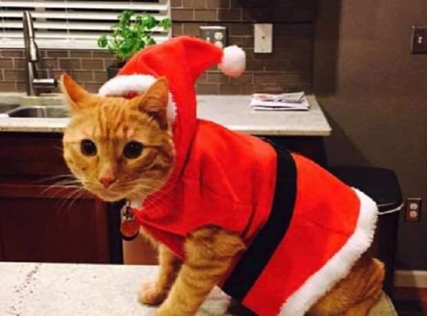 Рыжий кот убежал, оставив хозяйку в смятении. Хорошие новости помогли ей прийти в себя