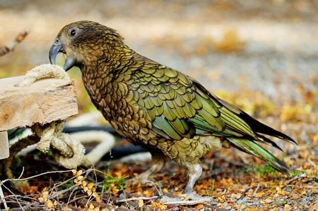 Учёные поразились интеллекту попугаев