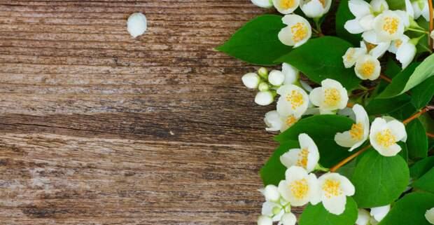 Благоухание любви: 5 ароматов женской притягательности
