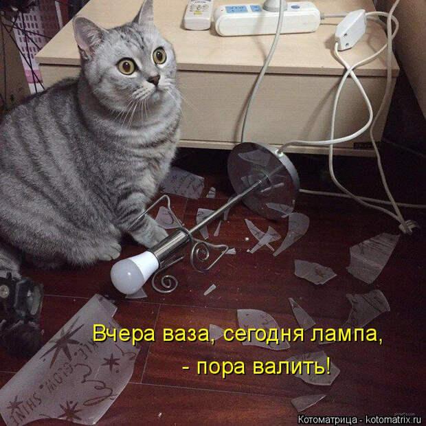 kotomatritsa_X5 (700x700, 379Kb)