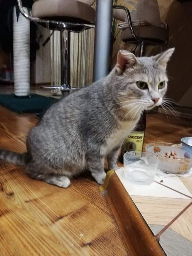 кошка с едой