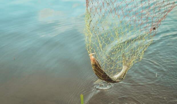 Омич попался наловле краснокнижной рыбы илишился свободы