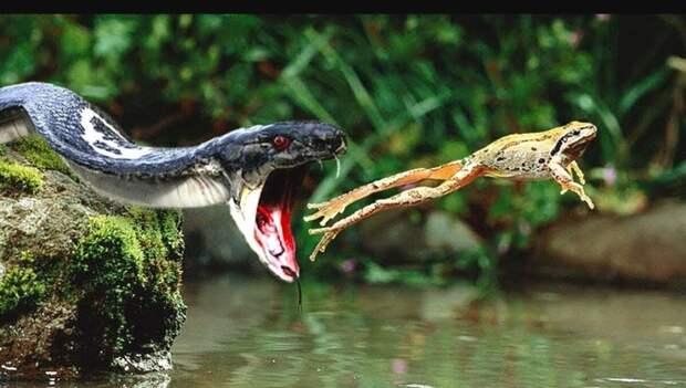 Хищники не разговаривают с едой