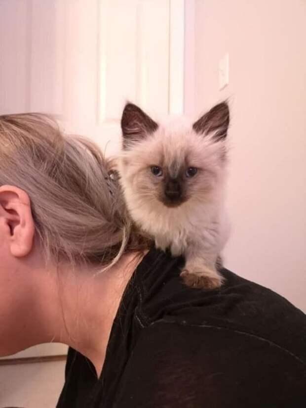 Котенок на шее