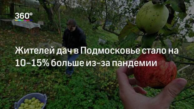 Жителей дач в Подмосковье стало на 10–15% больше из-за пандемии