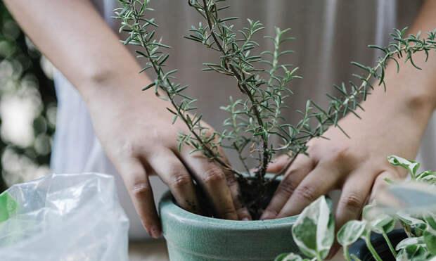 Афиша: Огород наподоконнике ифишки Zero Waste