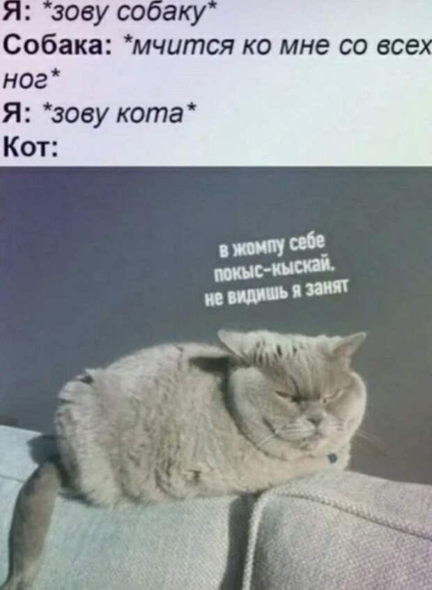 Отличные шутки и мемы
