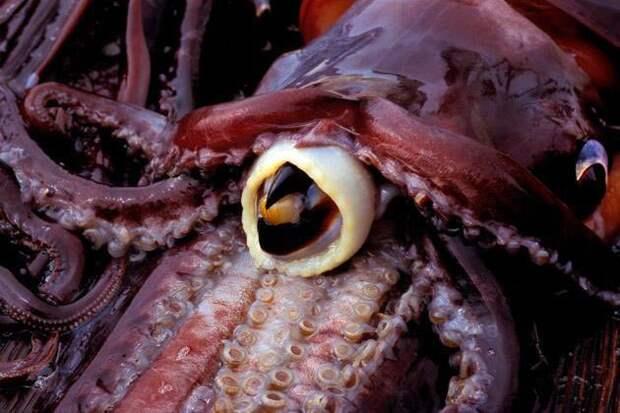 Женщина оценивает укусы различных животных. В топе — шиншилла и гигантский кальмар!