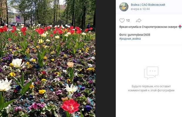 Фото дня: цветочная поляна в Старопетровском сквере