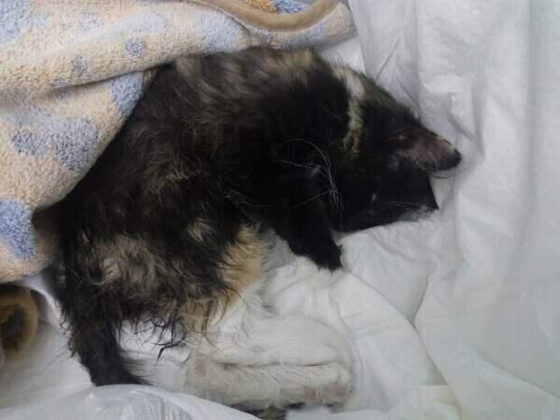 У дверей ветеринарной клиники люди бросили завязанный пакет волонтер, истории спасения, история спасения, котенок, кошка