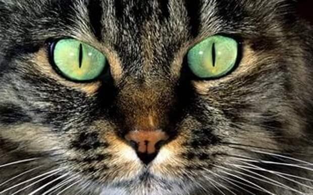 Кот гипнотизёр вводит собаку в транс (видео)